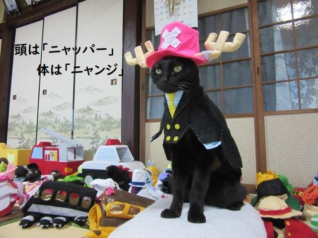 Cat cosplayer from Japan, Chocola, whose owner has hand-made 114 costumes for it, as Tony Tony Chopper from One Piece. (Photo: Twitter/@kigurumicyokor1)