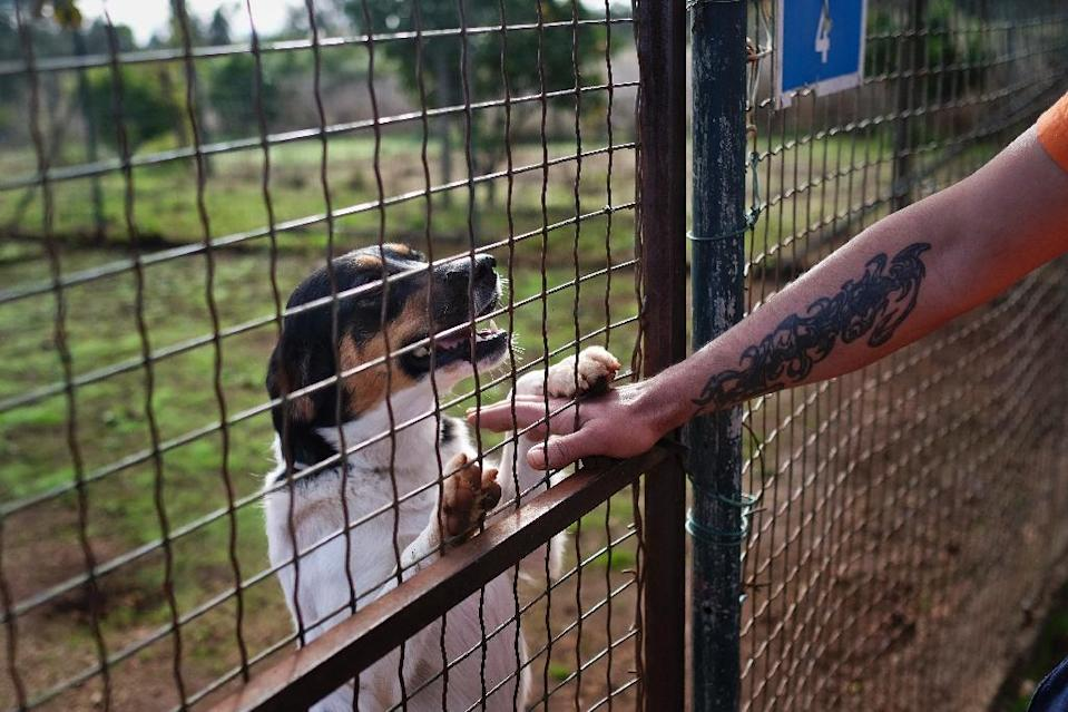 Monsanto prison officials stress the kennel is not a business, but rather a tool to help rehabilitate prisoners and prepare them to return to society by giving them job skills (AFP Photo/Patricia de Melo Moreira)