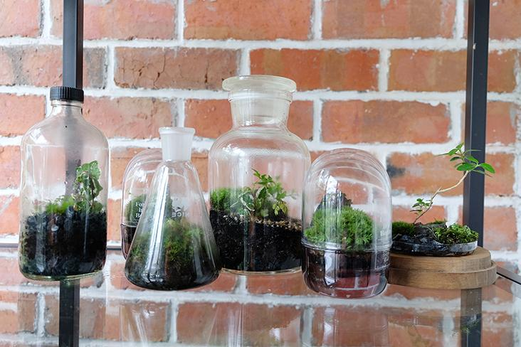 The different types of 'Forest in a Bottle' in a closed system