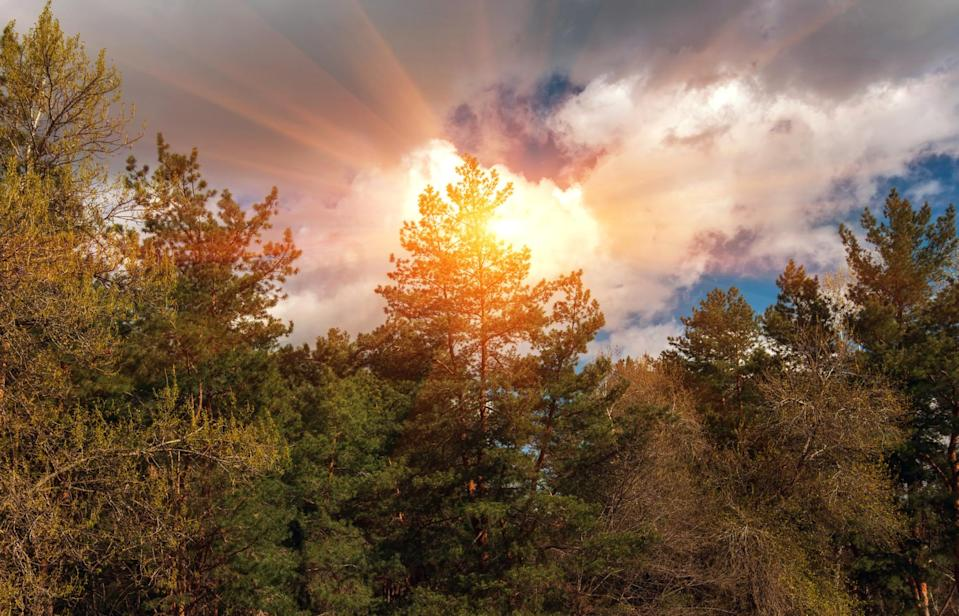 heat wave sun forest (Lumppini. iStock / Getty Images Plus)