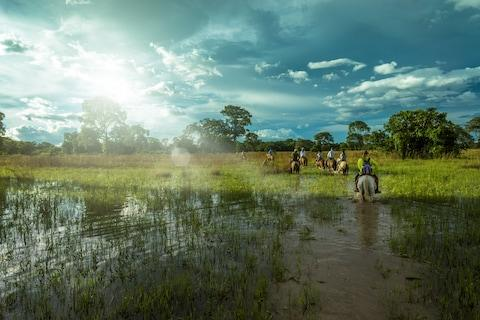 See our guide to the most unforgettable wildlife breaks - Credit: Frazao Media/Frazao Media
