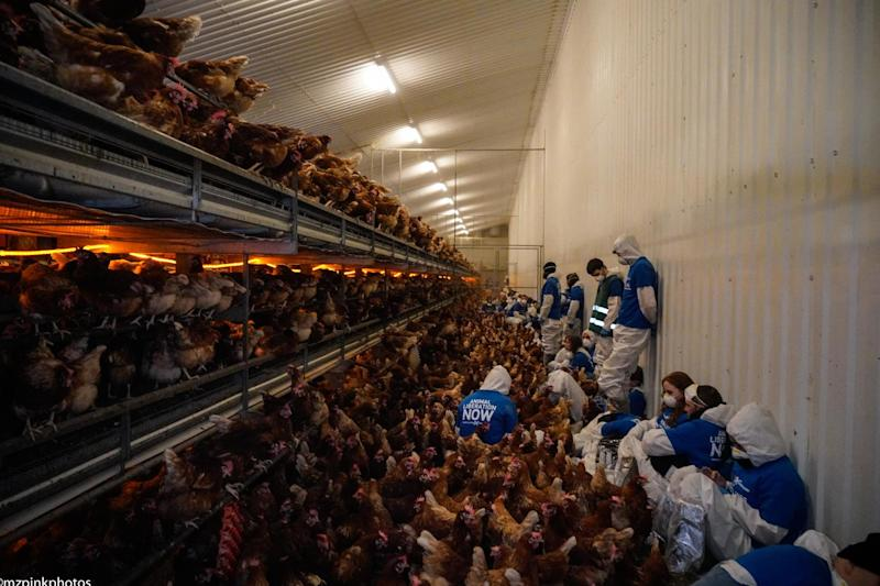 The activists spent nine hours inside the chicken enclave, demanding their release (DxE Brighton)