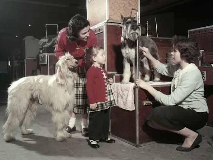 Owners grooming their dogs at the 1957 Westminster dog show.