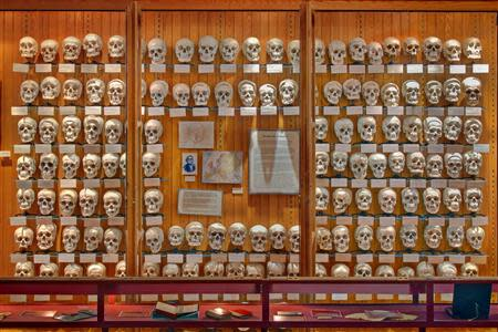 The Hyrtl Skull Collection is photographed in the Mutter Museum of The College of Physicians of Philadelphia