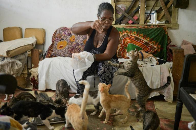 A woman feeds her cats at home in Havana