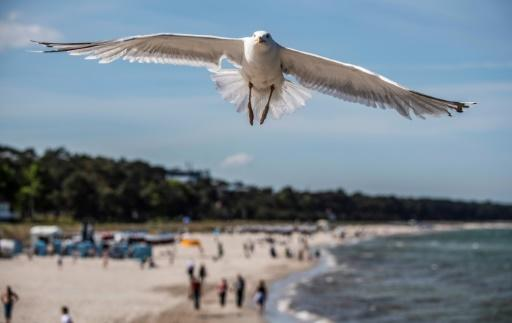 A seagull flies over a beach in the seaside resort of Binz, on the island of Ruegen in northern Germany