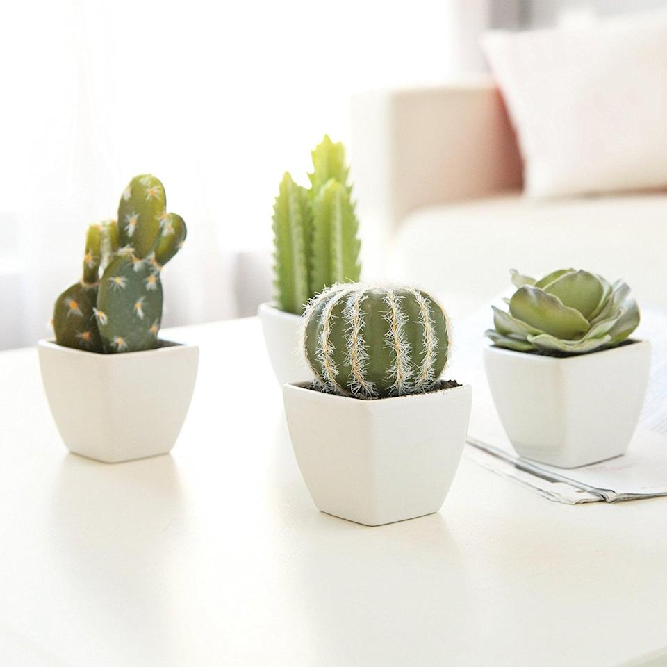 <p>These cute little <span>Artificial Mini Succulent &amp; Cactus Plants (Set of 4)</span> ($18) are perfect for lining up on a coffee table or spreading across your home.</p>