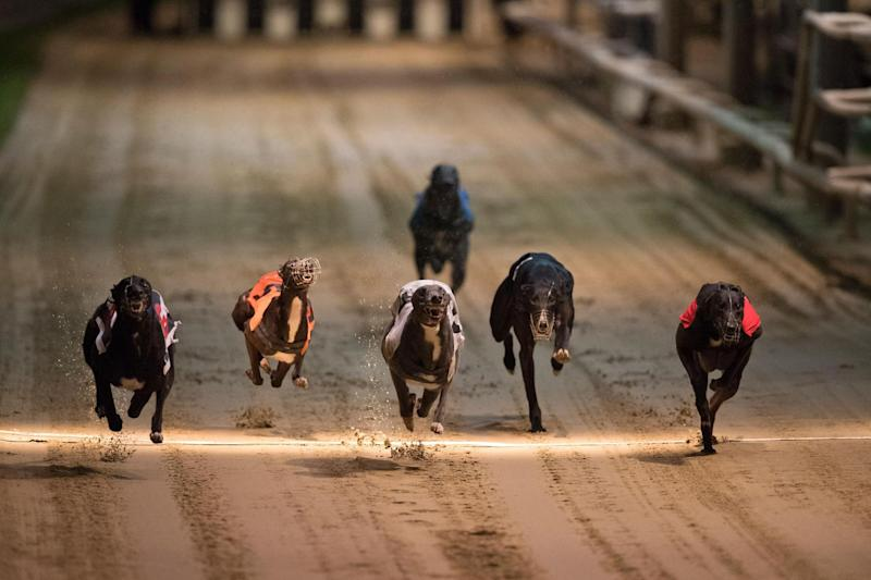 Last stand: the final race is this Saturday: AFP/Getty Images