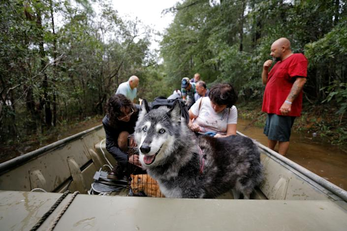 A Husky sled dog named Maya peers out from a rescue boat as she joins people fleeing rising flood waters in the aftermath of Hurricane Florence in Leland, North Carolina, U.S., September 16, 2018. REUTERS/Jonathan Drake