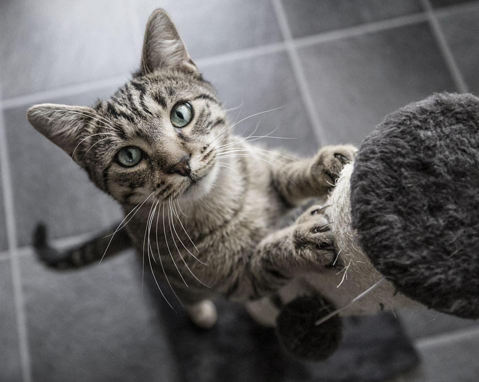 "<p>FYI for all you people allergic to cats: they <a href=""https://www.popsci.com/science/article/2011-07/fyi-why-my-cat-so-sneezy/"" rel=""nofollow noopener"" target=""_blank"" data-ylk=""slk:might be allergic to you"" class=""link rapid-noclick-resp"">might be allergic to you</a>, too! It's pretty uncommon due to the fact that we bathe ourselves more often than other species and don't shed as much hair or dead skin, but yes, it <em>does</em> happen.</p><p><strong>RELATED: </strong><a href=""https://www.goodhousekeeping.com/search/?q=cats"" rel=""nofollow noopener"" target=""_blank"" data-ylk=""slk:15 Reasons Why Cats Make the Best Pets"" class=""link rapid-noclick-resp"">15 Reasons Why Cats Make the Best Pets</a></p>"