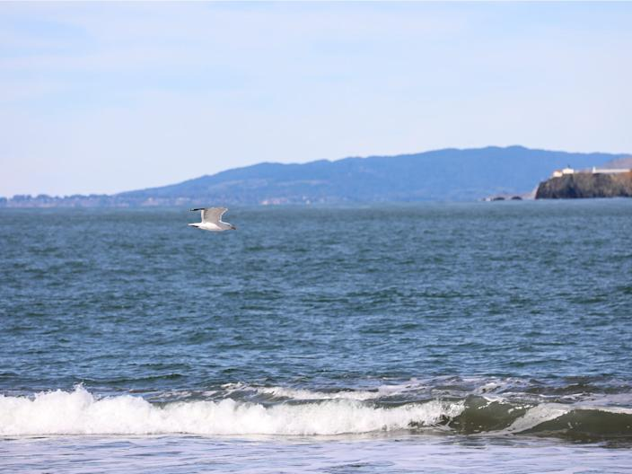 A seabird flies low over the water at China Beach.