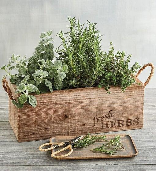 "<h3><h2>Harry & David Herb Garden</h2></h3><br>This herb garden will not only elevate your mom's delicious recipes — with proper care, it will brighten up her kitchen for years to come.<br><br><strong>Harry & David</strong> Herb Garden In Wooden Box, $, available at <a href=""https://go.skimresources.com/?id=30283X879131&url=https%3A%2F%2Fwww.harryanddavid.com%2Fh%2Fflowers-plants%2Fplants-garden%2F31483"" rel=""nofollow noopener"" target=""_blank"" data-ylk=""slk:Harry & David"" class=""link rapid-noclick-resp"">Harry & David</a>"