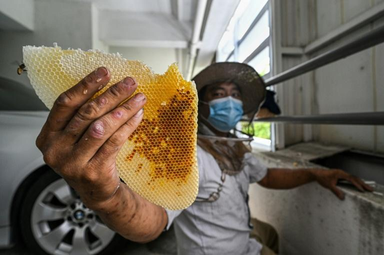 Wearing a short-sleeved shirt, trousers and sandals, Ooi is relaxed as he scoops up bees and honeycomb with his hands