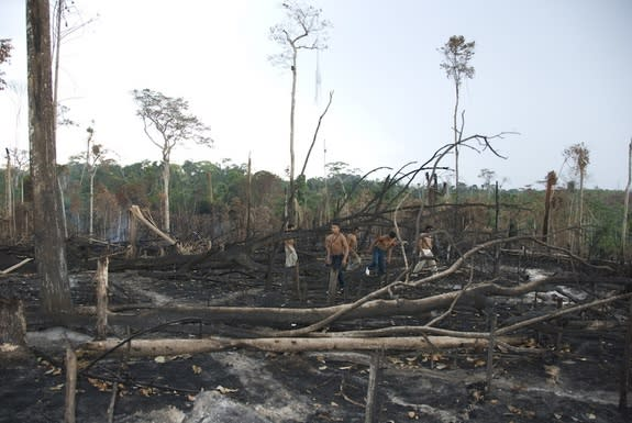 Members of the Awá tribe look over a deforested swatch of land. Illegal logging is increasingly encroaching on Awá territory.