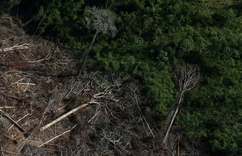 Deforestation in Brazil's Amazon retreats in July from 2019 record