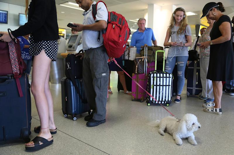 In this Aug. 8, 2016, file photo, a dog named Jazzy waits in line with Delta passengers at a ticket counter in Newark Liberty International Airport in Newark, New Jersey. (Photo: ASSOCIATED PRESS)