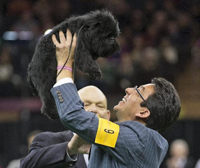FILE - In this Feb. 12, 2013 file photo, Ernesto Lara celebrates with Banana Joe, an affenpinscher, who won Best in Show, during the 137th Westminster Kennel Club dog show at Madison Square Garden in New York. The winner of the 138th Westminster Kennel Club will be picked Tuesday night, Feb. 11, 2014, at Madison Square Garden. Among the top contenders: A wire fox terrier, a bichon frise and a Portuguese water dog, the same breed that President Barack Obama's family owns.(AP Photo/Frank Franklin II, File)