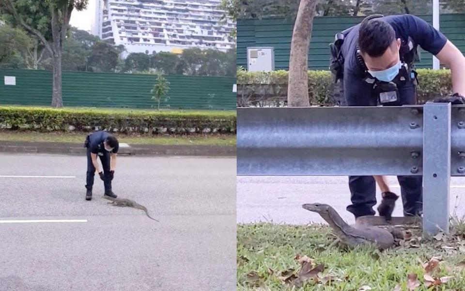 The police officers were saluted online for saving the wild creature. — Screengrabs via Facebook/JustKeepThinkingsg