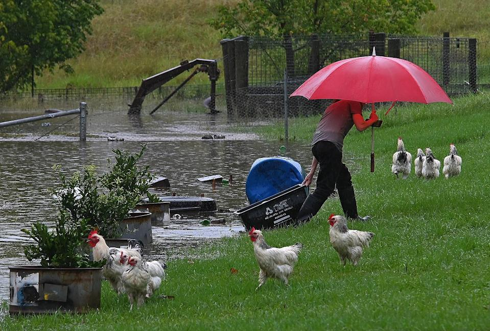 <p>A resident collects chickens from a flooded yard. Rain is expected for another few days in the area, <span>Reuters reports.</span></p>