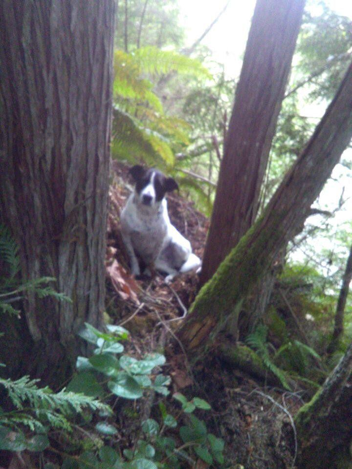 Daisy stuck by the body of her owner after he died during a hike in the woods, apparently from injuries sustained from a fall. Her barking ultimately led a search team to find them both. (Photo: Pierce County Sheriff's Office)