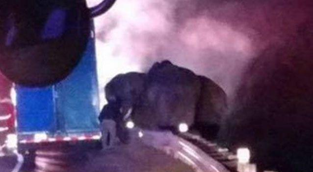 The elephants were on their way to a winter retreat. Chattanooga Fire Department