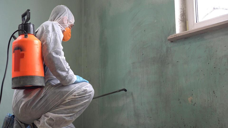 disinfecting mold on wall in house