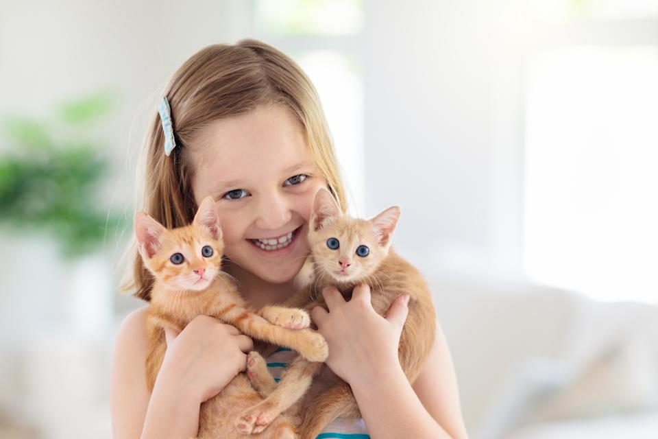 Child holding baby cat. Kids and pets. Little girl hugging cute little kitten at home. Domestic animal in family with kids. Children with pet animals.