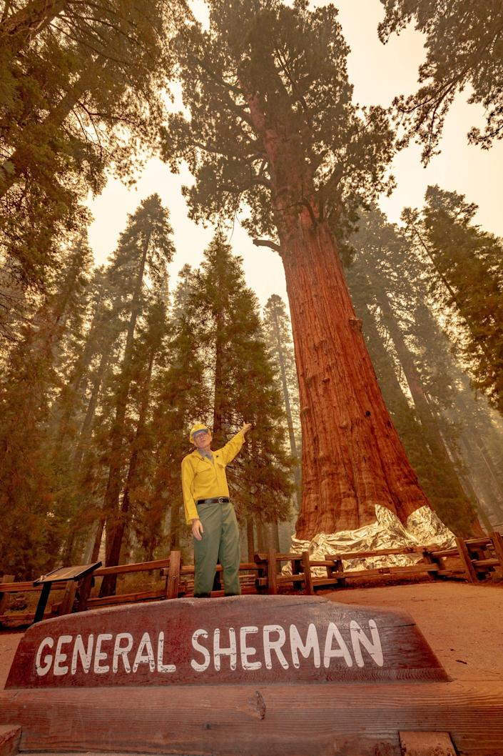 Sequoia and Kings Canyon National Parks Superintendent Clay Jordan speaks Wednesday, September 22, 2021 at the base of the General Sherman Tree. Previous prescribed burns in the area and removing fuels from around the tree are credited with saving the historic icon.
