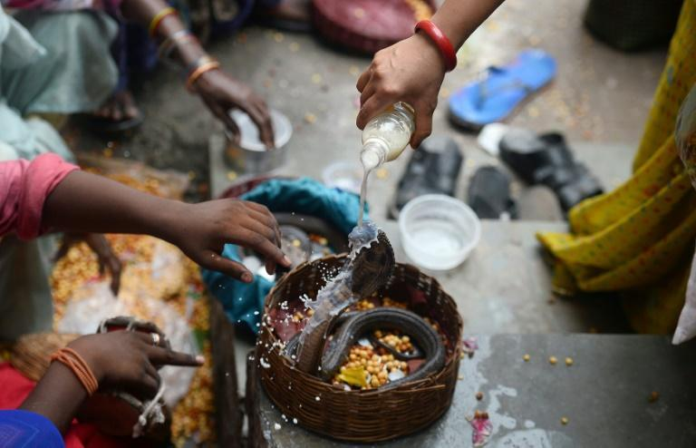 India's 800,000 snake charmers and their young apprentices come to the fore each year for the centuries-old Nag Panchami festival