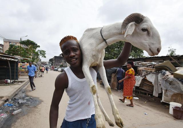 <p>A man carries a sheep during the Eid al-Adha celebrations in the Adjame district of Abidjan, Ivory Coast on Sept. 1, 2017.<br> (Photo: Sia Kambou/AFP/Getty Images) </p>