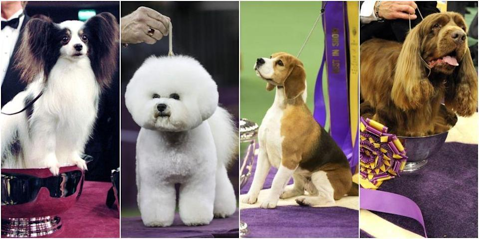 """<p>It's that time of year again, folks. The world's most stunning canines are getting ready to strut their stuff in the hopes of snagging Best in Show at the <a href=""""https://fwkc-web-prod.corebine.com/en/best-in-show-winners"""" rel=""""nofollow noopener"""" target=""""_blank"""" data-ylk=""""slk:Westminster Kennel Club Dog Show"""" class=""""link rapid-noclick-resp"""">Westminster Kennel Club Dog Show</a>. The second-longest continuously held sporting event in the U.S.—behind only the <a href=""""https://www.countryliving.com/food-drinks/g2348/kentucky-derby-recipes/"""" rel=""""nofollow noopener"""" target=""""_blank"""" data-ylk=""""slk:Kentucky Derby"""" class=""""link rapid-noclick-resp"""">Kentucky Derby</a>—has taken place in New York City ever since 1877. Let's take a look at some of the past winners, shall we? Bark twice for YES.</p>"""