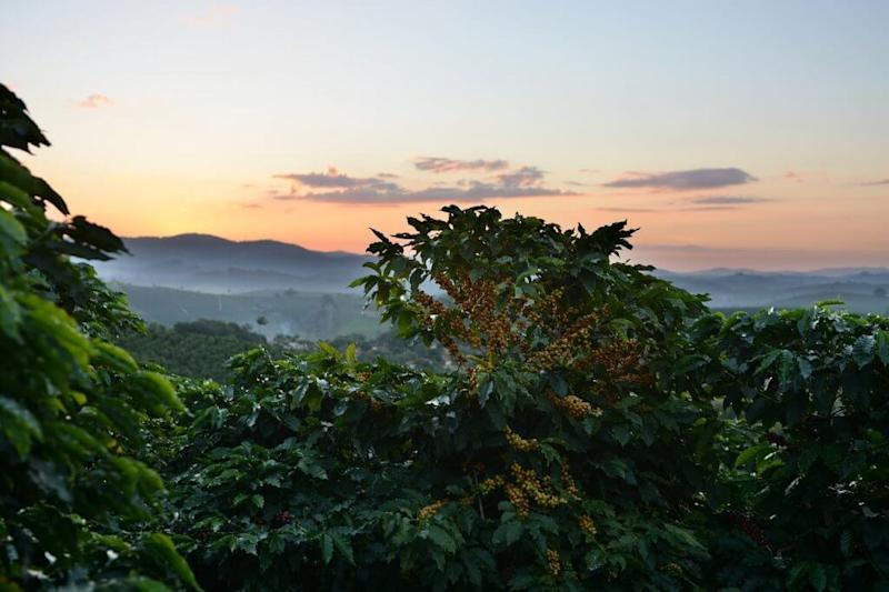 Why Brazilian farmers are using crypto coffee coins
