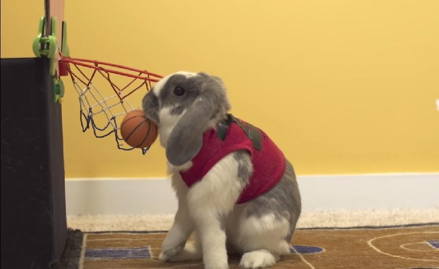 This bunny just won a Guinness World Record for basketball