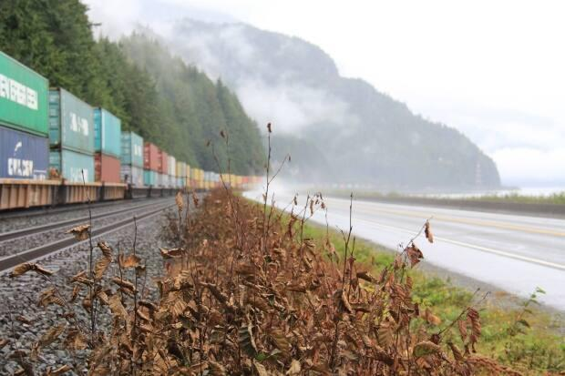 Brown vegetation is seen next to CN Rail tracks after pesticide was sprayed over the tracks in August 2017. The railway has been fined for spraying the pesticide without an approved Pest Management Plan in place. (T. Buck Suzuki Environmental Foundation - image credit)