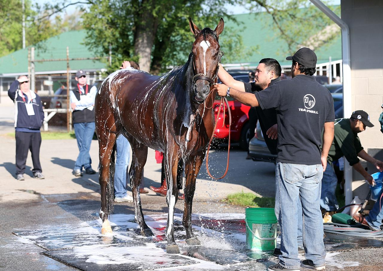 LOUISVILLE, KY - MAY 01:  Goldencents gets washed in the barn area during the morning training for the 2013 Kentucky Derby at Churchill Downs on May 1, 2013 in Louisville, Kentucky.  (Photo by Andy Lyons/Getty Images)