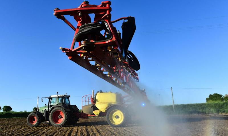 A French farmer sprays glyphosate herbicide produced by US agrochemical giant Monsanto on a field of corn