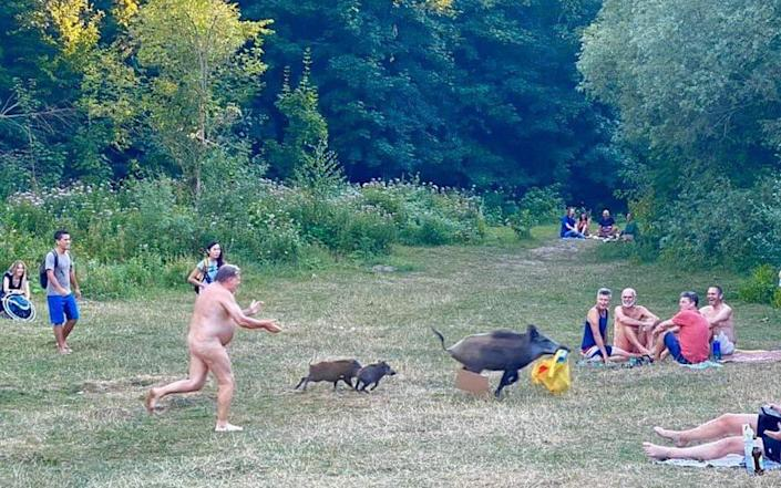 Nudist chases boar who stole his clothes and laptop A boar stole a man's bag at Teufelssee and here are the photos of the exciting chase. He was naked cause, well, Germans. Pic from social media - Social media