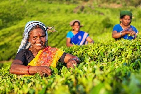 India tea - Credit: Getty