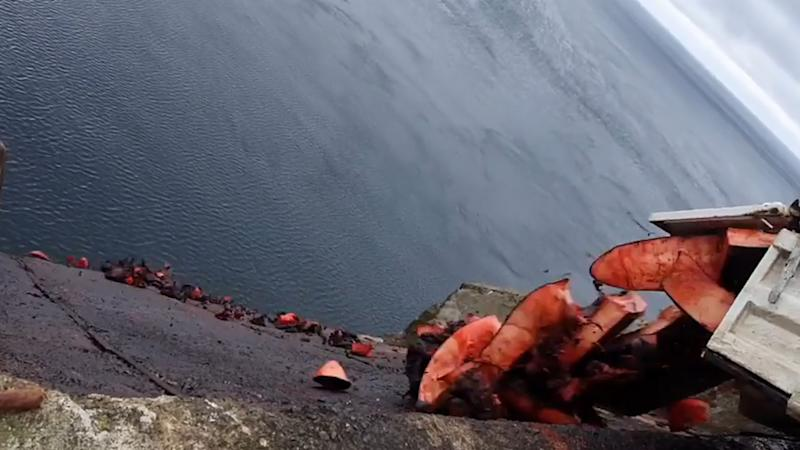 The unwanted flesh from five northern bottlenose dolphins is dumped off a cliff according to reports. Source: Sea Shepherd