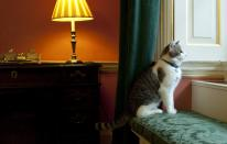 FILE - In this Tuesday Feb. 15, 2011 file photo, Larry, Downing Street's new official rat catcher, looks out of a window in the Prime Minister's residence in London, shortly after his arrival. Monday, Feb. 15, 2021 marks the 10th anniversary of rescue cat Larry becoming Chief Mouser to the Cabinet Office in a bid to deal with a rat problem at 10 Downing Street. (Mark Large/Pool photo via AP, file)
