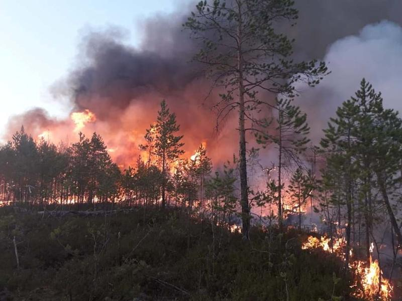 A wildfire in a forest in Khanty-Mansi Autonomous District in western Siberia, Russia, on 16 July 2020: Reuters/Russia's Aerial Forest Protection Service