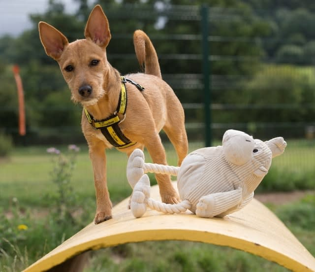 Dogs Trust dogs test products
