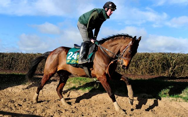 <span>Airlie Beach on the gallops at Willie Mullins' stables at Closutton</span> <span>Credit: PA Wire </span>