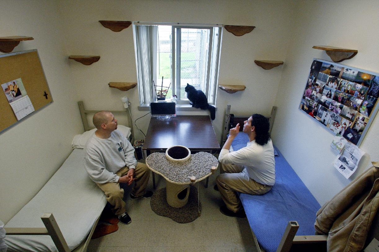 Inmates Joseph Walter, left, and ?Joseph Contreras watch Princess Natalie in a 12-by-10-foot cell, which resembles a dormitory room, at Larch Correctional Facility Friday, April 20, 2012, in Yacolt, Wash. The Cuddly Catz program at the Larch Correctional Facility, a minimum-security prison is several months old, but inmates say they've already noticed a difference in the cats and themselves. The program began in cooperation with a local animal shelter. It has grown to include two cats and four inmates, and the prison plans to add four more cats. (AP Photo/Rick Bowmer)