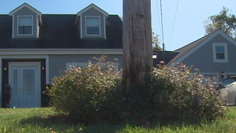 Hidden rot: Garden causes power pole to snap, throws worker to ground