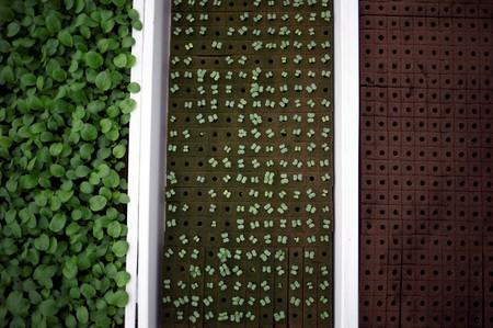 Vegetable seedlings are pictured at Comcrop's rooftop hydroponics farm at an industrial estate in Singapore