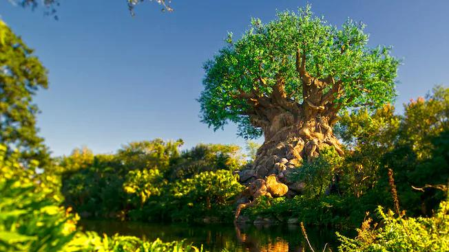 The Tree of Life at Disney's Animal Kingdom. (Photo: Disney+)