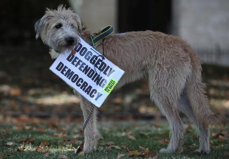 Anti-Brexit placard is attached to a dog in London