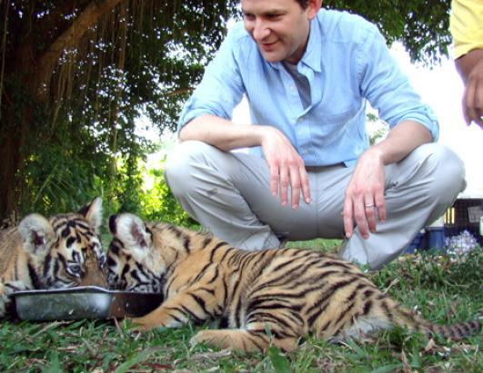 The Bali Zoo recently welcomed three female tiger cubs to its feline family. Here two of them, age two-and-a-half months, eat a lunch of chicken, milk and vitamins, with ABC News' Dan Harris looking on. Tigers are endangered, some subspecies critically so, by habitat destruction (mainly for logging and agriculture) and poaching