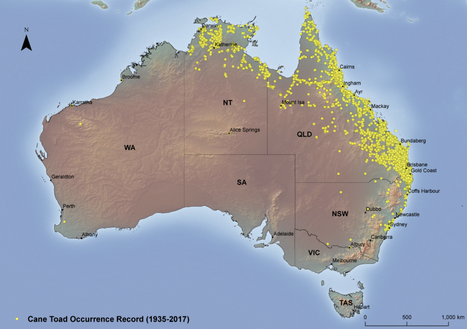 A map details where cane toads have been seen in Australia. There are yellow dots all the way down to the Victorian border